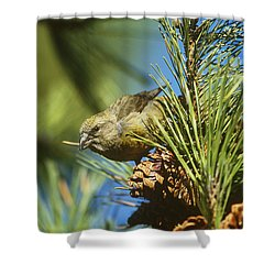 Red Crossbill Eating Cone Seeds Shower Curtain
