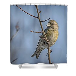 Red Crossbill Female Shower Curtain