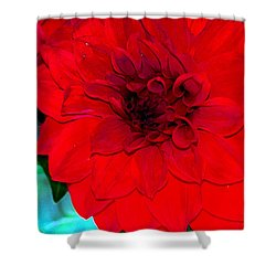 Red Dahlia Shower Curtain