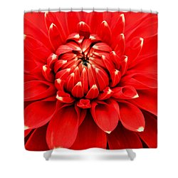 Red Dahlia With White Tips Shower Curtain by E Faithe Lester