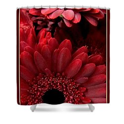 Red Daisies Shower Curtain by Danielle  Parent