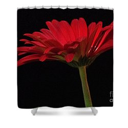 Red Daisy 2 Shower Curtain