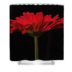 Red Daisy 4 Shower Curtain