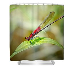 Red Damselfly Shower Curtain by Peggy Franz