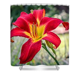 Shower Curtain featuring the photograph Red Daylily by Rob Sellers