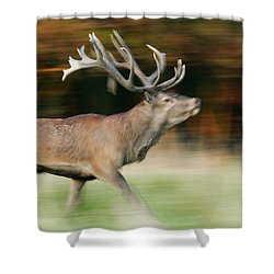 Red Deer Cervus Elaphus Stag Running Shower Curtain by Cyril Ruoso