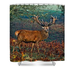 Red Deer Stag In Woodland Shower Curtain