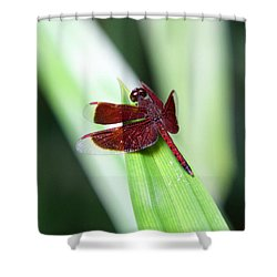 Shower Curtain featuring the photograph Red Dragon by Shoal Hollingsworth