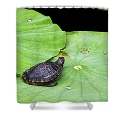 Red-eared Slider Shower Curtain by Greg Reed