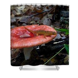 Red Eft On A Mushroom Shower Curtain