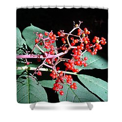 Red Elderberry Shower Curtain