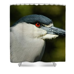 Shower Curtain featuring the photograph Red Eye - Black-crowned Night Heron Portrait by Georgia Mizuleva
