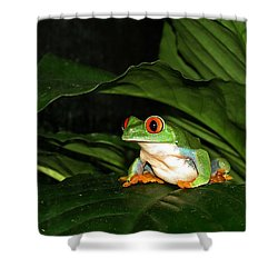Red Eyed Green Tree Frog Shower Curtain by MTBobbins Photography