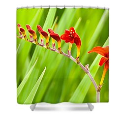 Red Flower Family Shower Curtain