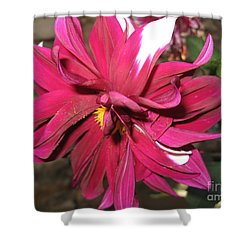 Red Flower In Bloom Shower Curtain