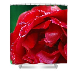 Red Flower Wet Shower Curtain by Matt Harang