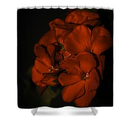 Shower Curtain featuring the photograph Red Flowers In Evening Light by Lucinda Walter