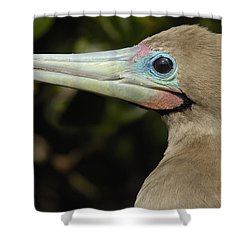 Red-footed Booby Close Up Galapagos Shower Curtain by Pete Oxford