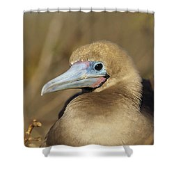 Red-footed Booby Incubating Eggs Shower Curtain by Tui De Roy