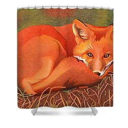 Red Fox Shower Curtain by Dan Miller