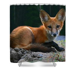 Red Fox Shower Curtain by Kristin Elmquist