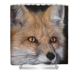 Shower Curtain featuring the photograph Red Fox Portrait Wildlife Rescue by Dave Welling