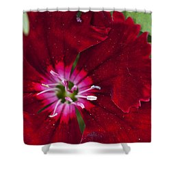 Red Geranium 1 Shower Curtain by Steve Purnell