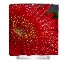 Red Gerber In The Rain Shower Curtain by Shelly Gunderson