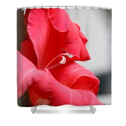 Lady In Red Shower Curtain by Patti Whitten