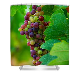 Red Grapes Shower Curtain by Hannes Cmarits