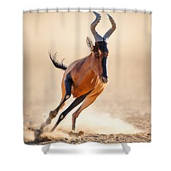 Red Hartebeest Running Shower Curtain by Johan Swanepoel