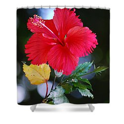 Red Hibiscus Flower Shower Curtain by Michelle Wrighton