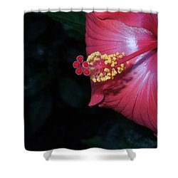 Shower Curtain featuring the photograph Red Hibiscus by Ron Davidson
