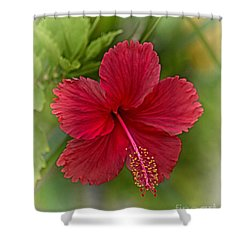 Red Hibiscus Shower Curtain by Wendy Townrow