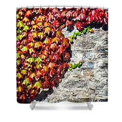 Shower Curtain featuring the photograph Red Ivy On Wall by Silvia Ganora