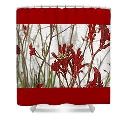 Red Kangaroo Paw Shower Curtain by Ben and Raisa Gertsberg