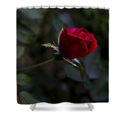 Red Knockout Rose Shower Curtain