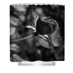 Red Knockout Rose In Monochrome Shower Curtain