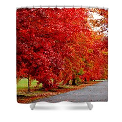 Red Leaf Road Shower Curtain