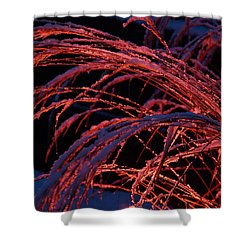 Red Light In Snow-heavy Grass Shower Curtain by Mick Anderson