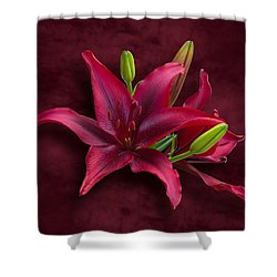 Red Lilies Shower Curtain by Jane McIlroy