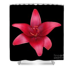 Shower Curtain featuring the photograph Red Lily by Judy Whitton