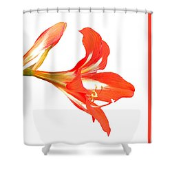 Shower Curtain featuring the photograph Red Lily by Rosalie Scanlon