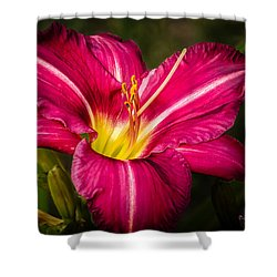 Red Magic Daylily Shower Curtain by Bob Orsillo