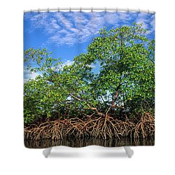 Red Mangrove East Coast Brazil Shower Curtain by Pete Oxford