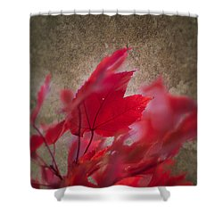 Red Maple Dreams Shower Curtain