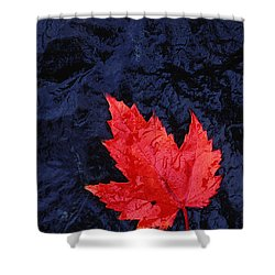 Red Maple Leaf And Black Stone - Fs000222 Shower Curtain by Daniel Dempster
