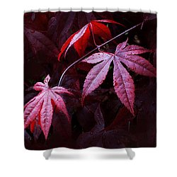 Red Maple Trio Shower Curtain