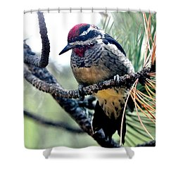 Red-naped Sapsucker On Pine Tree Shower Curtain
