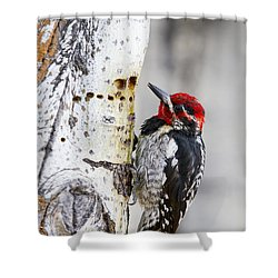 Red-naped Sapsucker Shower Curtain